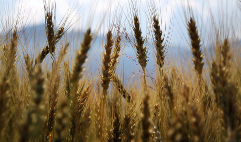 Separating the wheat from the chaff – mapping your suppliers